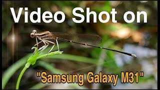 Video Shot on Samsung Galaxy M31