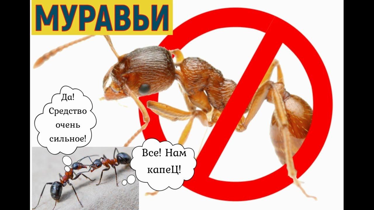 Муравьи: Дом, Сад и Огород! Лучшие Средства, чтобы урожайный огород и рассада не стали муравейником