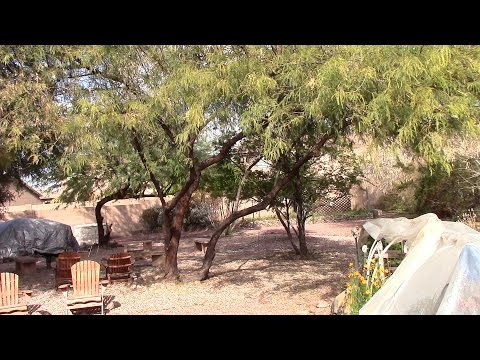 A Tour of an Arizona Backyard Garden and Wildlife Oasis - Presented by OneHeartFire