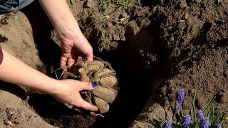 Kalendarz ogrodnika na 04.05 - 10.05 - Maj w ogrodzie. Prace ogrodnicze w maju / Ogród na co dzień