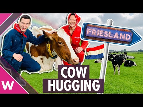 Cow hugging in Friesland, The Netherlands | Eurovision 2020 travel
