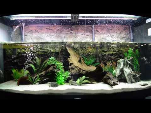 Stinkpot Musk Turtle Tank - Feeding Timelapse - Sternotherus Odoratus