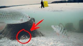 КТО ПРЯЧЕТСЯ В ПОДВОДНОМ ЛЕСУ??? Зимняя рыбалка в палатке! Ловля окуня и плотвы на мормышку