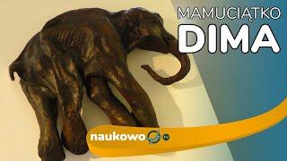 Dima – znalezisko które zapoczątkowało wizję sklonowania mamuta