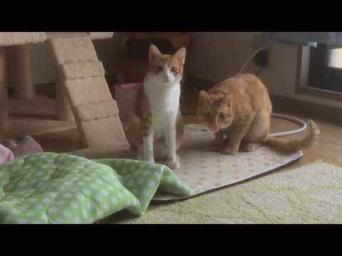 フレーメン反応する猫『保護猫るる らら物語』
