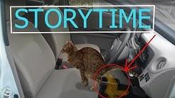 Kissa ripuloi autoon 😼 ja Garden Warfare 2 pelausta