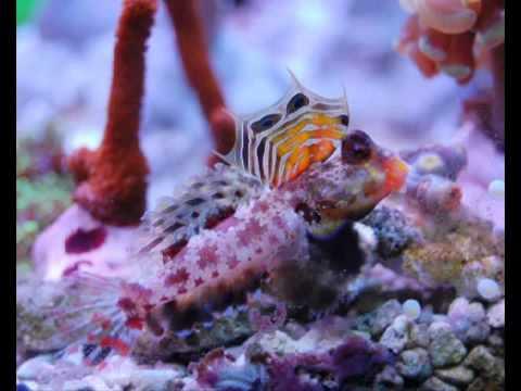 Aquarium von Roland K  www meerwasserriff forum de