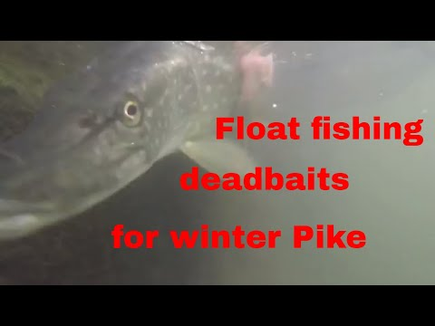 Float fishing deadbaits for winter pike on the Gloucester canal