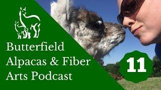 Podcast Episode 11: the Alpaca Podcast Returns!