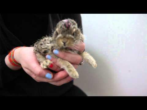 Wildlife Rehabilitation Society Of Edmonton