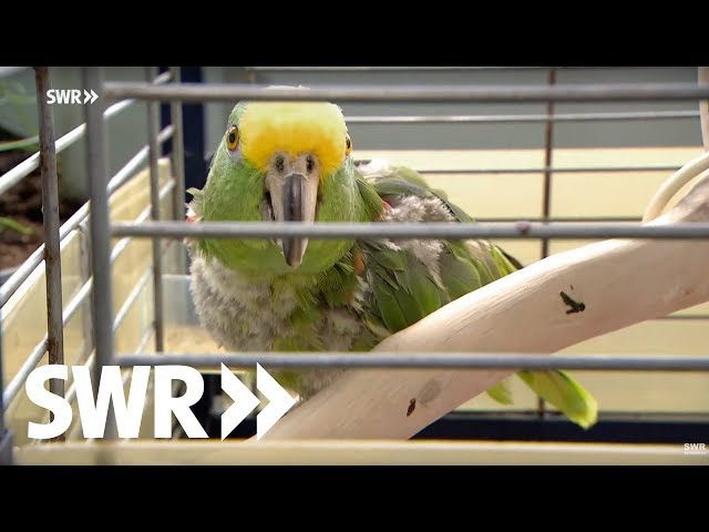 Ein Papagei, eine Ziege und ein Pferd | SWR Tierarztgeschichten