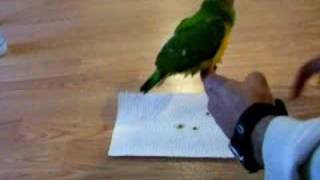 How to potty train your parrot