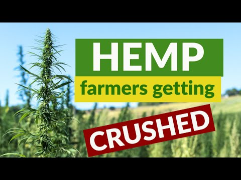 hemp report – **hemp report live** american hemp dreams are being crushed by these 5 challenges