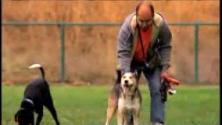 Advice For Curbing Aggressive Dogs