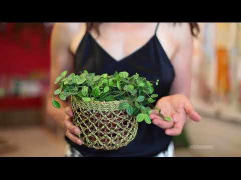 Ep 027: Six Easy Houseplants for Beginners - Plant One On Me