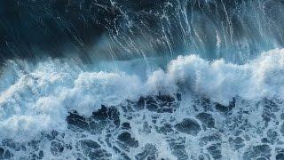 Rybacy wyłowili z Bałtyku przerażającą istotę! Zobaczcie nagranie!