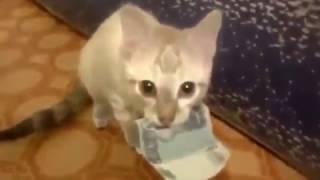 чудо-кот хахах смотреть срочно