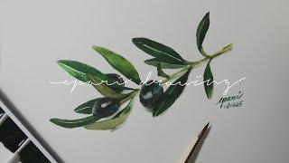 Olive Branch Watercolor 올리브 수채화 | epari drawing