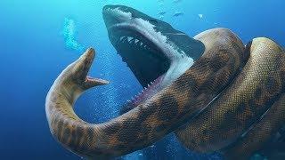 Megalodon VS Titanoboa क्या होगा जब सबसे बड़ी शार्क भिड़ेगी सबसे बड़े सांप से ?