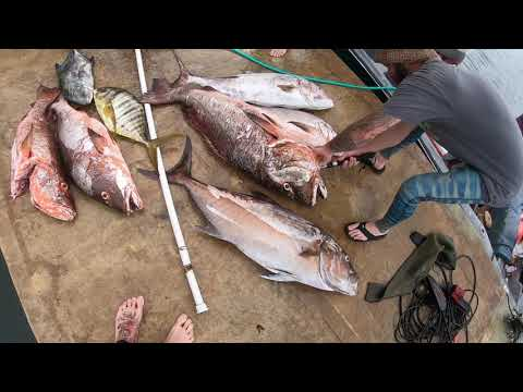 Spearfishing Panama 2019