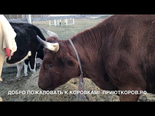 Осень 2018 в приюте коров