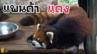 สวนสัตว์ 5,000 ไร่ ใหญ่ที่สุดในโลก EP 3. (จบ)
