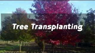 Ontario Tree Farms, GTA tree movers, tree planting and transplanting