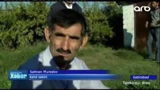Sabirabadda qeyri adi canlı tutulub - ARB TV
