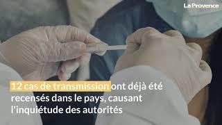 Coronavirus pourquoi le Danemark va abattre 15 millions de visons