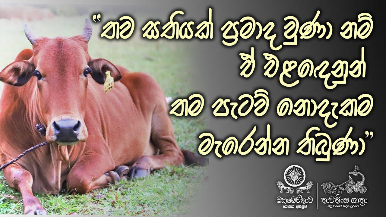 Thawathinsa Yathra Abhaya Dana