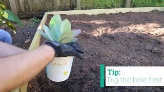How to Plant Desert Escape Cacti and Succulents - Costa Farms