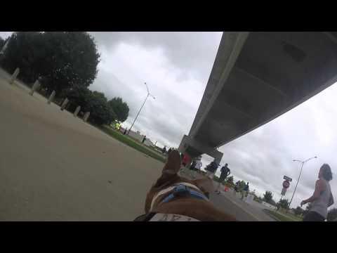Rex - Adoptable Pit Bull Runs 5K Road Race
