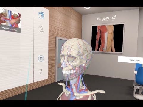 Virtual Reality In Human Anatomy Course