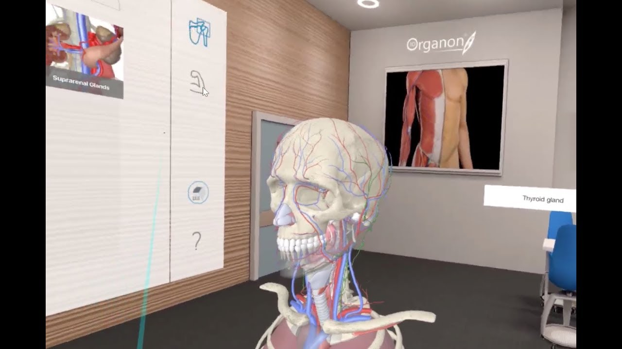 Virtual Reality In Human Anatomy Course Youtube