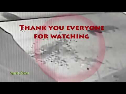 Kaplanların şehre inip Köpeklere saldırması kameralara yansıdı