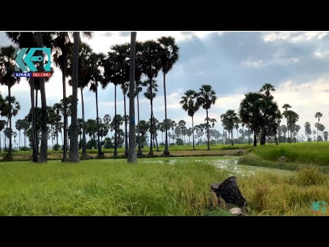 The Beautiful Khmer countryside video footage by Khmer Record.