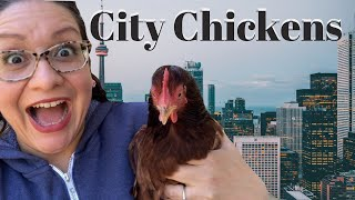 Urban Chicken Keeping   Keeping Backyard Chickens in the City