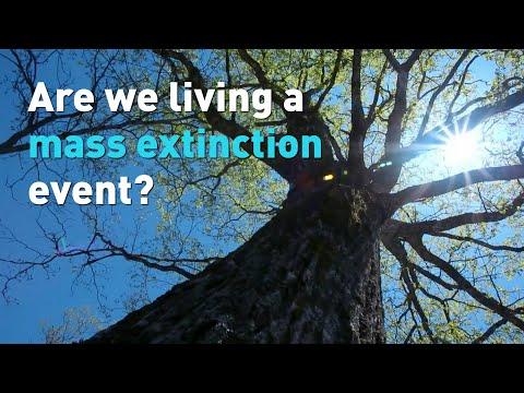Are we living a mass extinction event?
