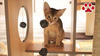 仔猫達にCatit Vesper Box Largeを買ってみた【瀬戸のるかめる日記】I bought Catit Vesper Box Large thumbnail
