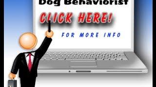 Dog Behaviorist,best Dog Trainer And Dog Behaviorist