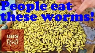 People eat these worms: BBC Hindi