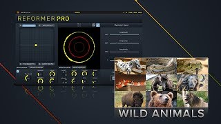 Wild Animals Bundle Library Preview