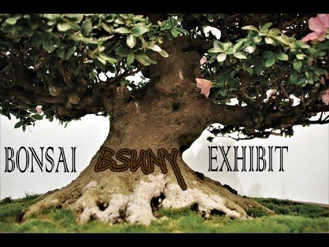 BSUNY Bonsai Exhibit 2017