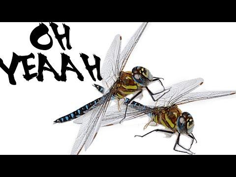 XXX DRAGONFLIES CAUGHT ON TAPE 18+