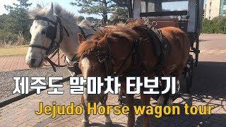 제주도 말마차 타보기 Jejudo horse wagon tour