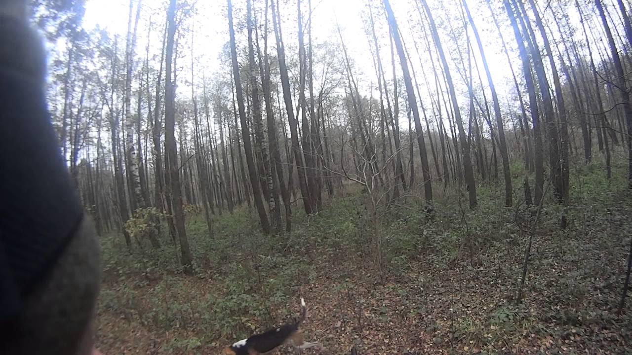 В Смоленской области задержаны браконьеры (+18) - YouTube