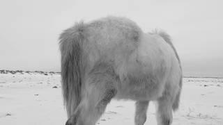 Verneri Pohjola / Mika Kallio - Animal Image (Official Music Video) thumbnail