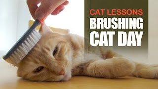 Cat Completely Loves Being Brushed