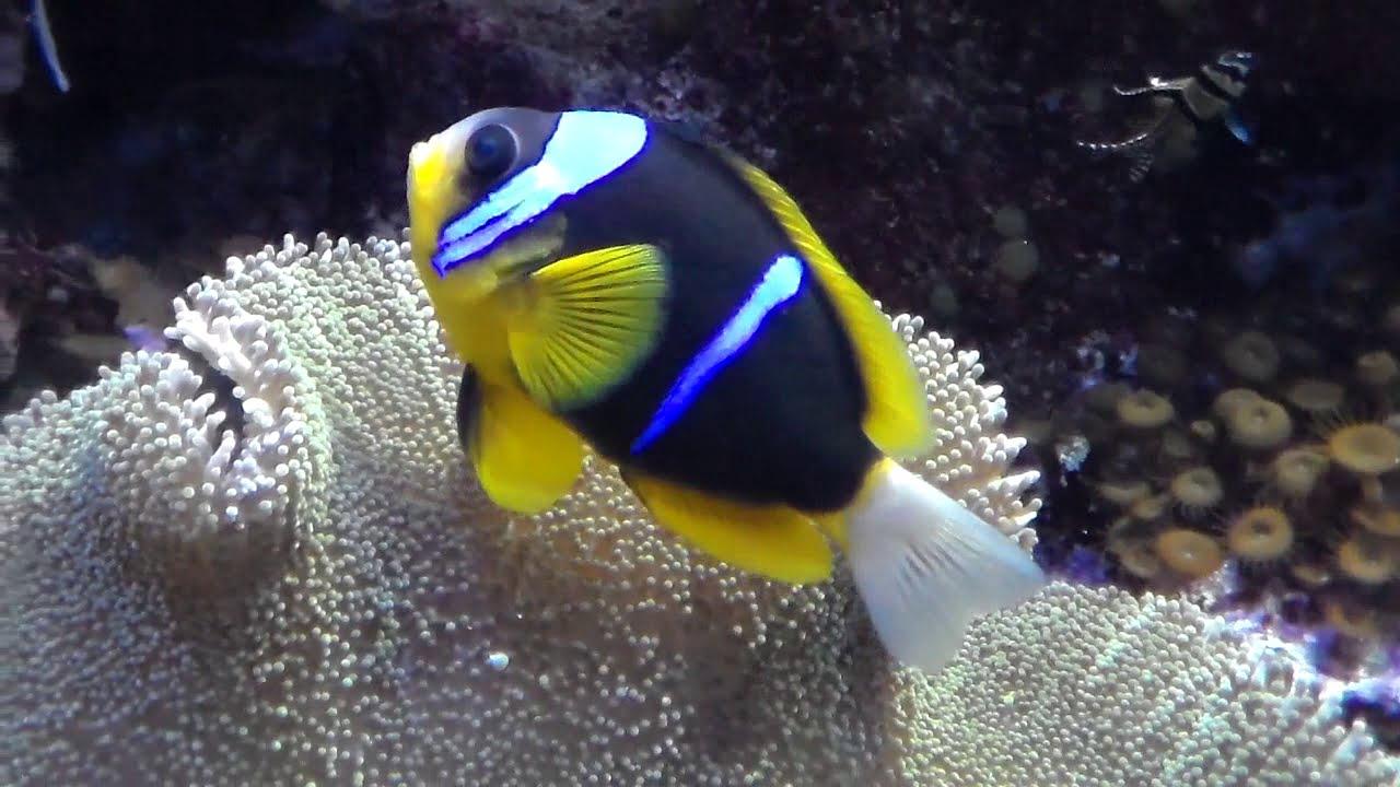 Pesci tropicali e coralli acquario di genova 4 4 for Pesci acquario
