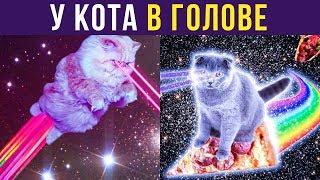 Приколы с котами. Что происходит у кота в голове | Мемозг #209